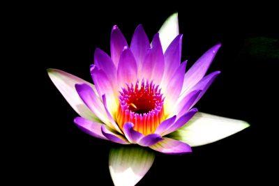 Sri Nityananda Ashram Meditation Mount Eliza